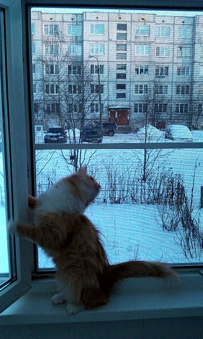 Коты и москитные сетки на